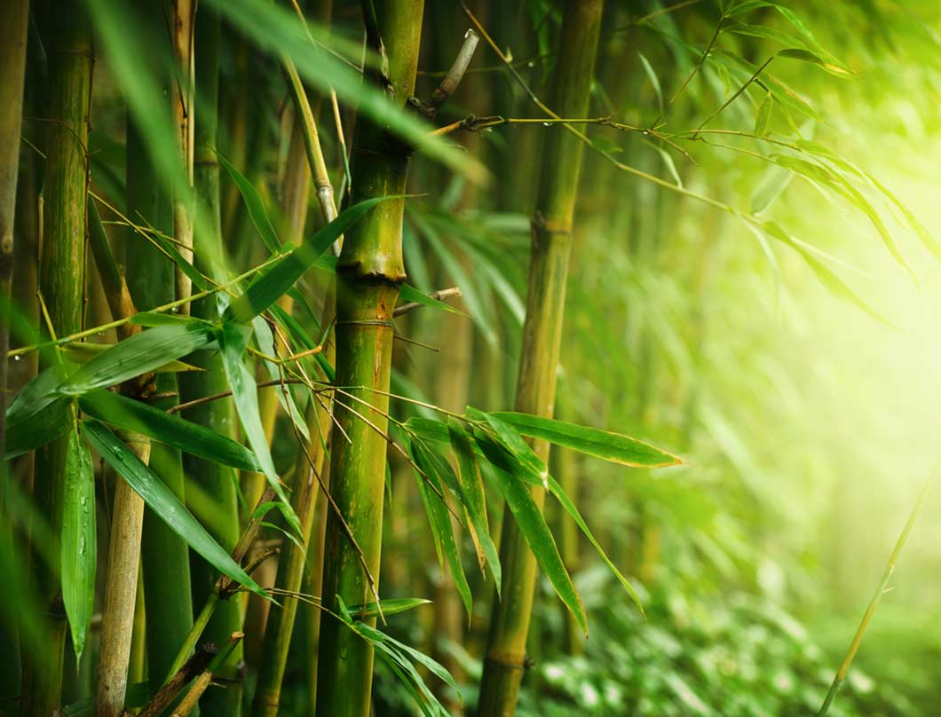 bamboo with cool comfort pillow